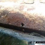 riviera_boattail04